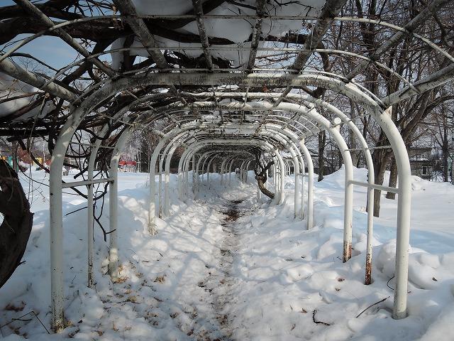 冬の公園5